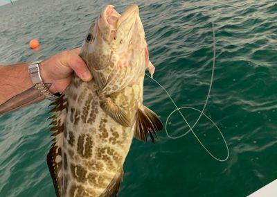 fishing charters in islamorada